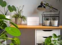 Contemporary and light study office with an urban jungle feeling thanks to numerous green plants. Small lightbox for text options royalty free stock photography