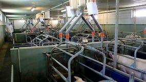 Contemporary pig farm stock video footage