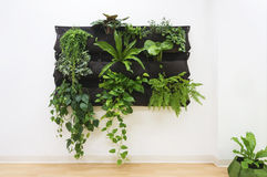 Contemporary Plants on Wall. Royalty Free Stock Photos