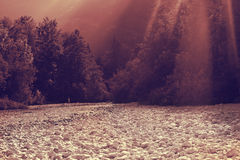 Contemporary romance in woods. Rays of the sun breaking through the trees over a river. Bohinj, Slovenia stock photography