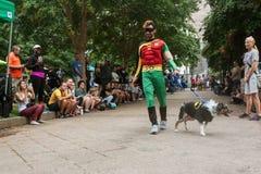 Contendientes que llevan la estafa de Batman y de Robin Costumes Participate In Doggy imagen de archivo libre de regalías