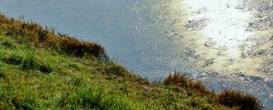 Contenga en una pequeña charca en un día soleado del otoño con la hierba verde y Imagen de archivo libre de regalías