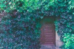 Contenga la fachada con la puerta del vintage cubierta con la uva salvaje Imágenes de archivo libres de regalías