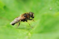 Contenga la mosca Imagen de archivo