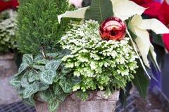 Contenitore decorativo di Natale Fotografia Stock Libera da Diritti