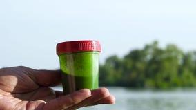 Contenitore della tenuta della mano del primo piano con le alghe verdi e stringerlo leggermente stock footage
