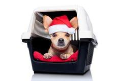 Contenitore di cesto per cani Fotografie Stock