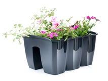 Contenitore di fiore Immagini Stock Libere da Diritti