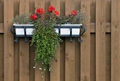 Contenitore di fiore immagine stock