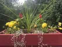 Contenitore di fiore Fotografia Stock