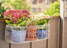 Contenitore di fiore del balcone Fotografie Stock Libere da Diritti