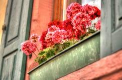 Contenitore di fiore del davanzale della finestra Fotografia Stock