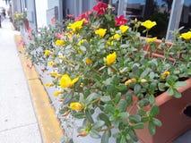 Contenitore di fiore della finestra fotografia stock