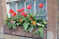 Contenitore di fiore della finestra Immagine Stock