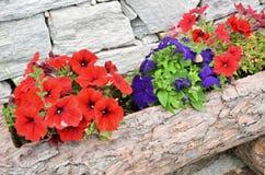 Contenitore di legno di fiore Fotografia Stock Libera da Diritti