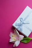 Contenitore di regalo bianco con il singolo fiore di alstroemeria su backgr cremisi Fotografie Stock
