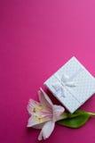 Contenitore di regalo bianco con il singolo fiore di alstroemeria su backgr cremisi Immagini Stock