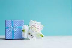 Contenitore di regalo blu con il singolo fiore di alstroemeria sul fondo della menta Fotografie Stock Libere da Diritti