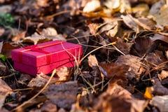 Contenitore di regalo con le foglie degli alberi nella foresta di autunno immagini stock libere da diritti