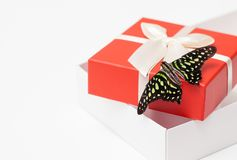 Contenitore di regalo della farfalla su bianco Immagine di priorità bassa Fotografia Stock Libera da Diritti