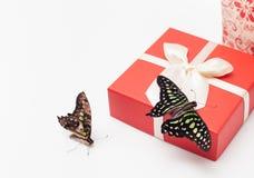 Contenitore di regalo della farfalla su bianco Immagine di priorità bassa Fotografie Stock Libere da Diritti