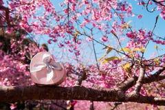 Contenitore di regalo rosa del cuore sul fondo del fiore e dell'albero Biglietto di S. Valentino Immagini Stock Libere da Diritti