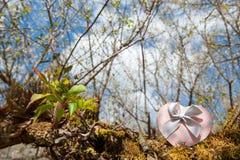 Contenitore di regalo rosa del cuore sul fondo del fiore e dell'albero Biglietto di S. Valentino Fotografie Stock