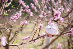 Contenitore di regalo rosa del cuore sul fondo del fiore e dell'albero Biglietto di S. Valentino Immagini Stock
