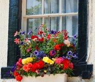 Contenitore inglese di fiore della finestra Fotografia Stock Libera da Diritti