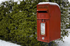 Contenitore rosso di alberino nella neve Fotografie Stock