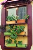 Contenitori Colourful di fiore in finestra fotografia stock libera da diritti