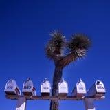 Contenitori di alberino Fotografia Stock