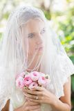 Content bride wearing veil over face holding rose bouquet. In the countryside Royalty Free Stock Images