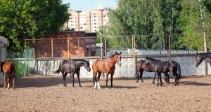 Content Horse Stock Photos