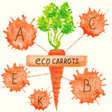 The content of vitamins in carrots. Stock Photos