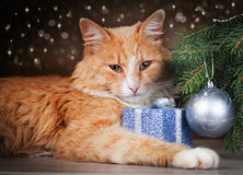 Contented ginger cat lying under Christmas tree holding a gift Stock Image