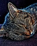Contentment. Tabby cat laying asleep on a chair relaxing and content with life stock images