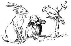 contes de la chèvre noire-22 Royalty Free Stock Image
