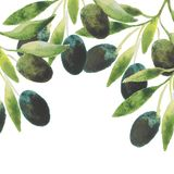 Contesto dei rami dell'olio d'oliva dell'acquerello di vettore Fotografie Stock