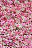 Contesto della rosa di bianco e di rosa Fotografie Stock Libere da Diritti