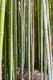 Contesto di bambù Fotografie Stock