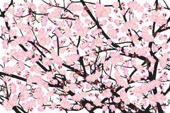Contesto di legno della corteccia del nero del fiore di ciliegia dell'albero di sakura di rosa della piena fioritura royalty illustrazione gratis