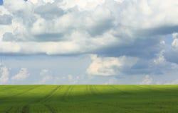 contesto naturale di cielo blu e dei settori verdi coperti di erba Fotografia Stock