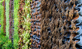 contesto verticale del giardino Fotografia Stock