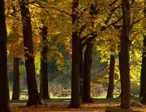 Contexte d'automne Photos stock