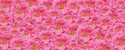 Contexte floral de papier peint rose de texture de rose images libres de droits