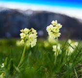 Contexte vibrant horizontal de fond de bokeh de fleurs de montagne photos libres de droits