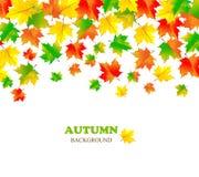 Contexto bonito do outono com o bordo de queda da cor Fotos de Stock Royalty Free