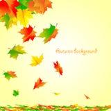 Contexto brillante hermoso del otoño con caer Imagenes de archivo