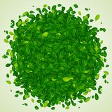 Contexto com folhas verdes Fotografia de Stock Royalty Free